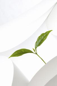 紙のテクスチャと新芽の写真素材 [FYI04171683]