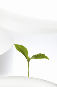 紙のテクスチャと新芽の写真素材 [FYI04171694]