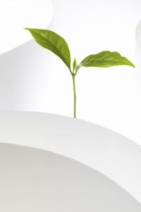 紙のテクスチャと新芽の写真素材 [FYI04171696]