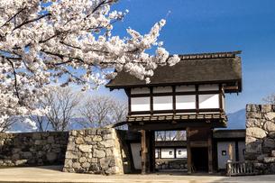 信州 長野県長野市松代 松代城(海津城)の桜の写真素材 [FYI04172174]