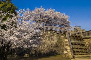 信州 長野県長野市松代 松代城(海津城)の桜の写真素材 [FYI04172182]