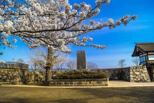 信州 長野県長野市松代 松代城(海津城)の桜の写真素材 [FYI04172235]