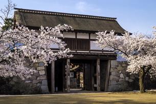 信州 長野県長野市松代 松代城(海津城)の桜の写真素材 [FYI04172254]