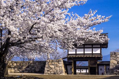 信州 長野県長野市松代 松代城(海津城)の桜の写真素材 [FYI04172261]