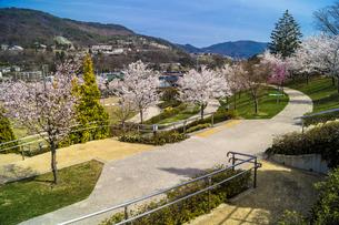 信州 長野県長野市 城山公園の桜の写真素材 [FYI04172438]