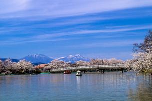 信州 長野県須坂市 臥龍公園の桜の写真素材 [FYI04172558]