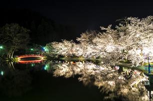 信州 長野県須坂市 臥龍公園の弁天橋と桜のライトアップの写真素材 [FYI04172613]