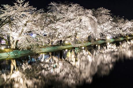 信州 長野県須坂市 臥龍公園の桜のライトアップの写真素材 [FYI04172614]