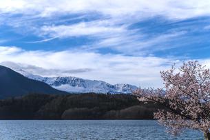 信州 長野県大町市 春の青木湖の桜の写真素材 [FYI04173246]