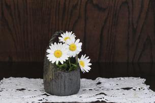 焼き物の器に入れた花ノースポールの写真素材 [FYI04173497]