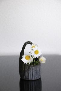 焼き物の器に入れた花ノースポールの写真素材 [FYI04173498]