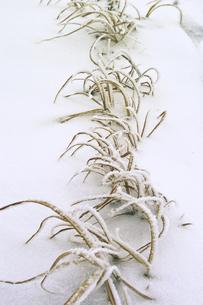 枯れ草の写真素材 [FYI04174106]