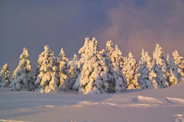 夕焼けに色づく雪原の写真素材 [FYI04174230]