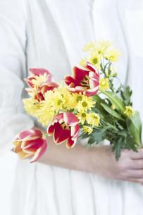 チューリップの花束を持つ手の写真素材 [FYI04175027]