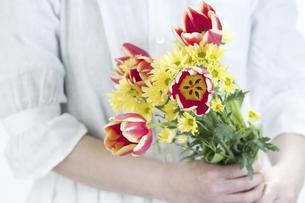 チューリップの花束を持つ手の写真素材 [FYI04175028]