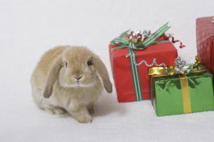 ウサギのクリスマスの写真素材 [FYI04175601]