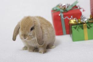 ウサギのクリスマスの写真素材 [FYI04175603]