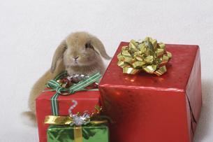ウサギのクリスマスの写真素材 [FYI04175606]