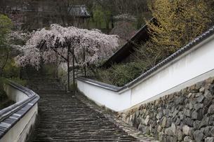 桜咲く長谷寺の写真素材 [FYI04175919]