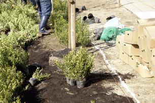 公園の植木の植栽の写真素材 [FYI04176348]