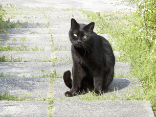 黒い野良猫の写真素材 [FYI04176620]