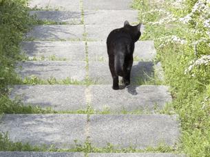 黒い野良猫の写真素材 [FYI04176621]