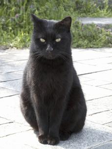 黒い野良猫の写真素材 [FYI04176625]