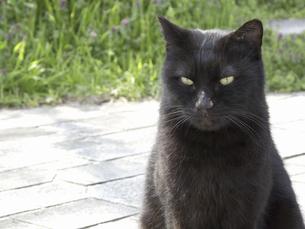 黒い野良猫の写真素材 [FYI04176626]