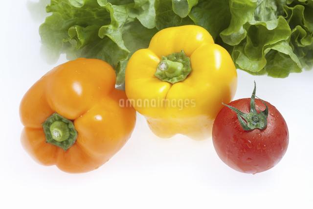 野菜の写真素材 [FYI04178717]
