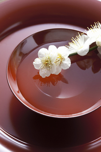 梅の花と杯の写真素材 [FYI04179007]