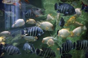 魚の群れの写真素材 [FYI04179297]