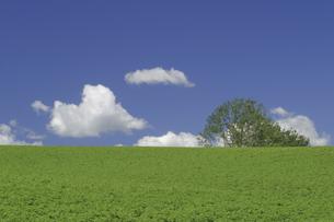 マイルドセブンの丘の写真素材 [FYI04180422]
