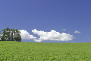 マイルドセブンの丘の写真素材 [FYI04180424]