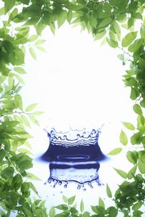 新緑の葉のフレームと滴の写真素材 [FYI04182132]