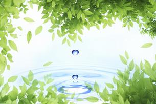 新緑の葉のフレームと水滴の写真素材 [FYI04182134]