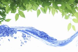 新緑の葉のフレームと波の写真素材 [FYI04182135]