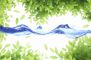 新緑の葉のフレームと波の写真素材 [FYI04182137]