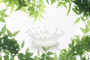 新緑の葉のフレームとミルククラウンの写真素材 [FYI04182140]