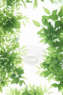 新緑の葉のフレームとミルククラウンの写真素材 [FYI04182141]