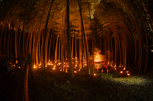 竹林ライトアップ(小机城址市民の森)の写真素材 [FYI04182951]