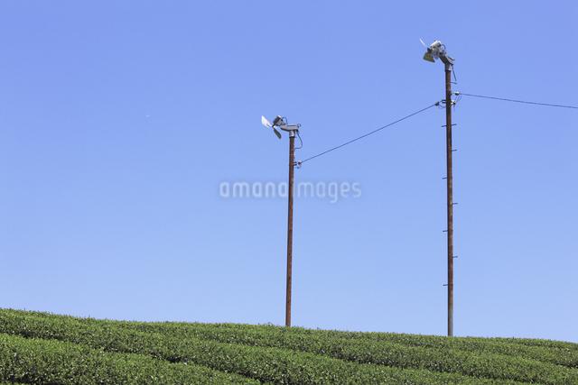 茶畑の写真素材 [FYI04182988]