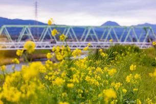 狩川の写真素材 [FYI04183444]