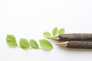 色鉛筆の木の写真素材 [FYI04183511]