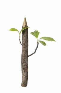 色鉛筆の木の写真素材 [FYI04183544]