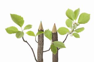 色鉛筆の木の写真素材 [FYI04183547]