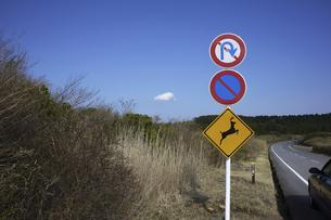 鹿飛び出し注意の道路標識と道路脇の藪の写真素材 [FYI04184520]