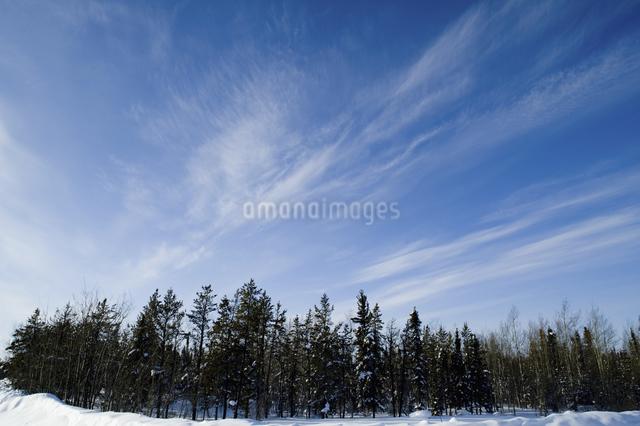 カナダ/イエローナイフの森の写真素材 [FYI04185127]