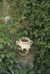 緑と壷の写真素材 [FYI04185723]
