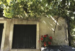玄関先の鉢植えと緑の写真素材 [FYI04185767]
