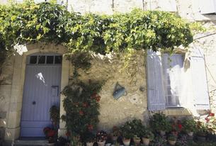 玄関先の鉢植えと緑の写真素材 [FYI04185806]